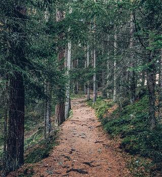 Spur im Wald
