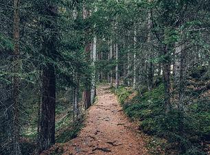 Trail in het bos