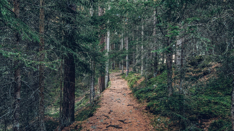Trail in Woods