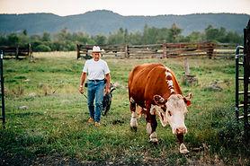 Granjero con vaca