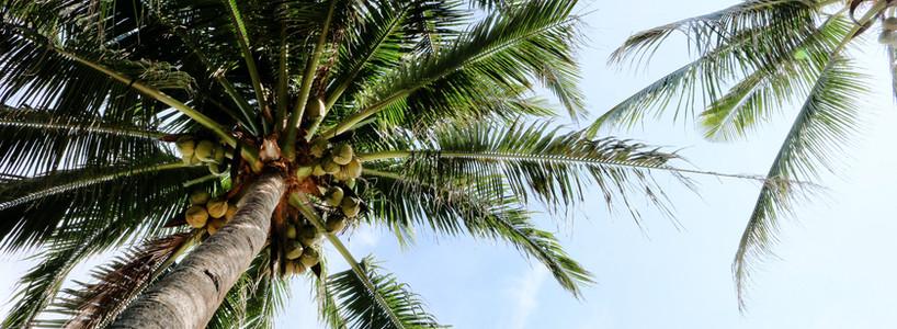 Coconuts Farmers from Peravuruni