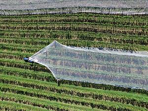 Truck in Crop Fields
