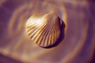 6/21 - National Seashell Day