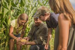 Examinando as colheitas