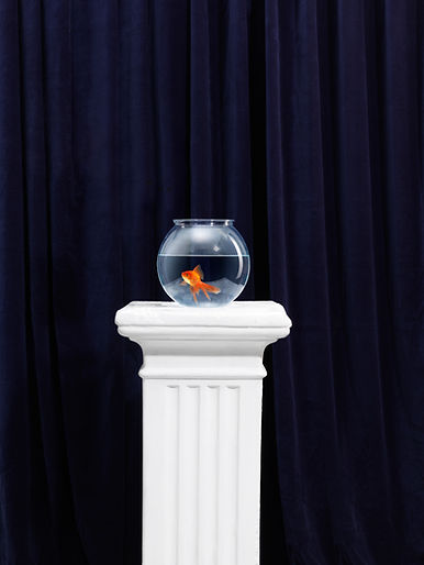 Gold Fish, Tropical Fish, Aquarium Repairs, Aquarium Maintenance, 24hr fish tank repairs, Goldfish in a bowl, Adelaide, South Australia aquarium stores, online aquarium store