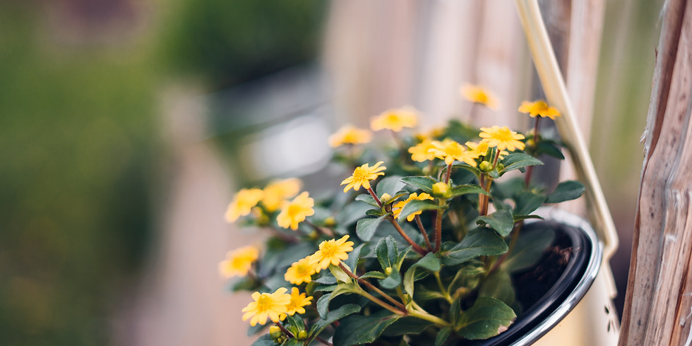 Flower Container Gardening Class