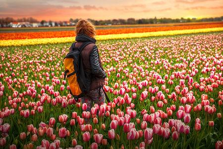 Tulpenvelden