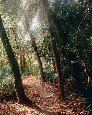 Chemin de la forêt