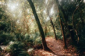 Sentier en forêt, naturopathie, la voie de la nature, le chemin de la nature