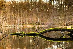 Groene tak in het meer