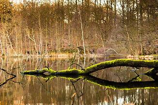 Grüner Zweig im See