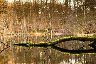 Green Branch in Lake