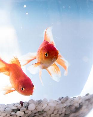 물고기 보울