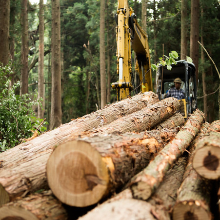 Timber Tax Proposals--March 18 LWVLC Meeting                  by Jean Cowan