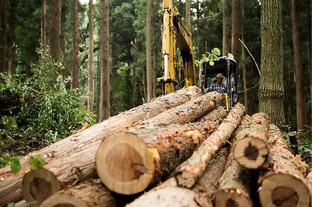 Loggar in Forest