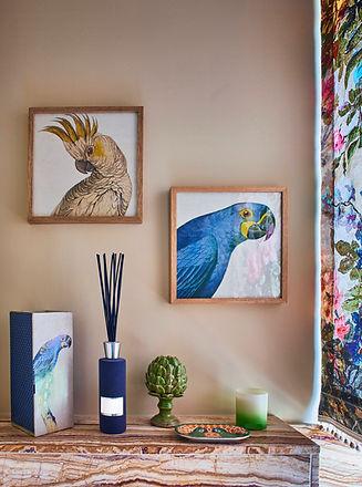 Affiches d'oiseaux