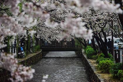 橋のたもとに咲く花