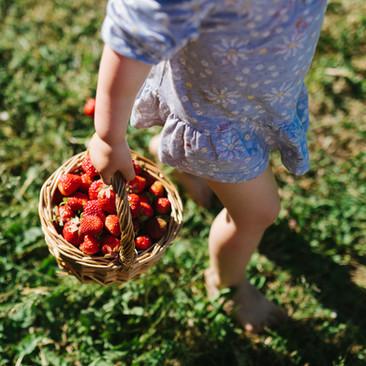 Erdbeeren pflücken Lüneburg
