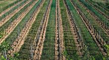 INPS: Agricoltura – aliquote contributive anno  2021