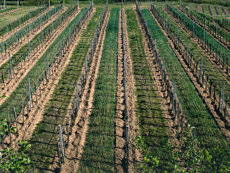 In Emilia-Romagna partono i rimborsi per la cimice asiatica
