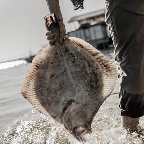 Celebra Conapesca 20 años de creación y trabajo conjunto con el sector pesquero y acuícola del país