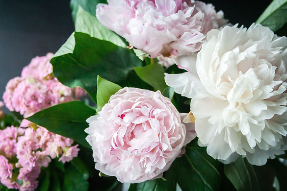 牡丹の花束