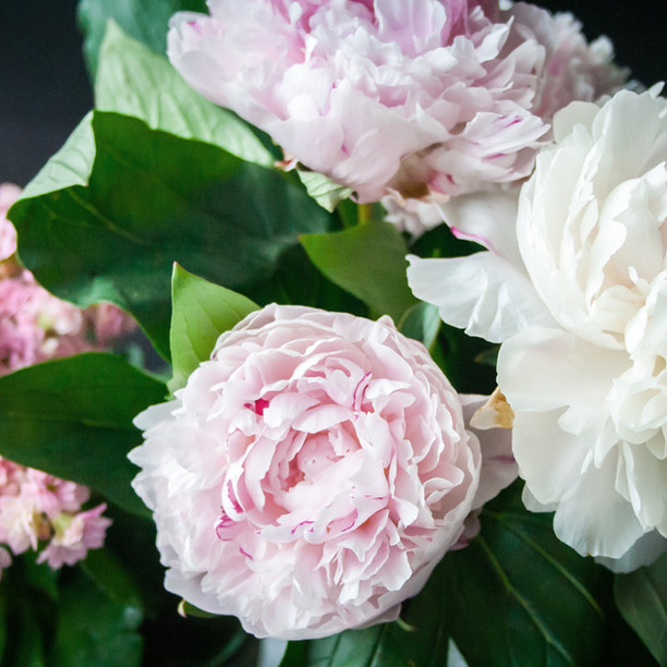 Dreamy Peonies, perfect for a June wedding
