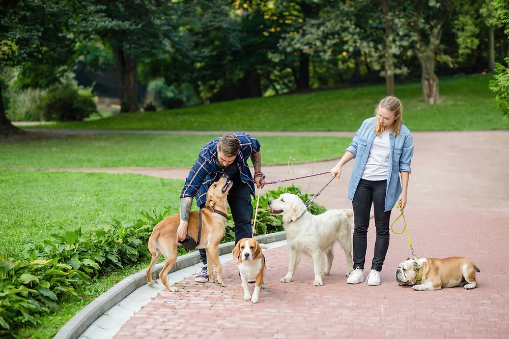 カップルで犬の散歩