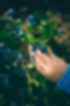 Blaubeerbusch