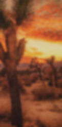 Dramatic Desert Background