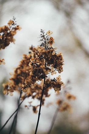 trockene Blumen Feng Shui Wohgefühl