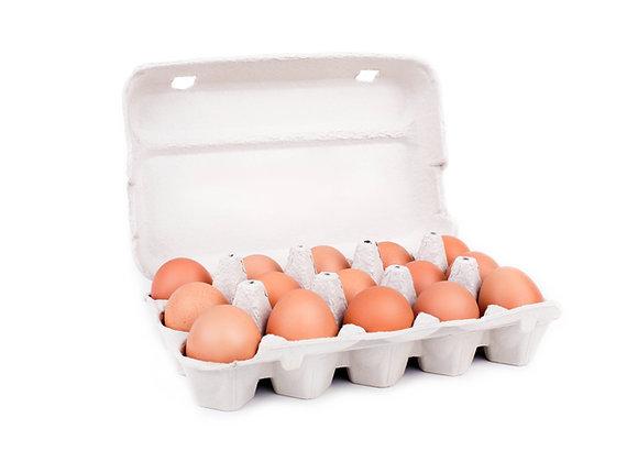 Telur Ayam (10 Pcs)