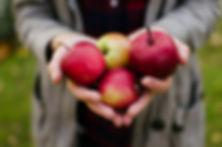 選んだ赤いリンゴ