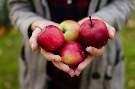 Plockade röda äpplen