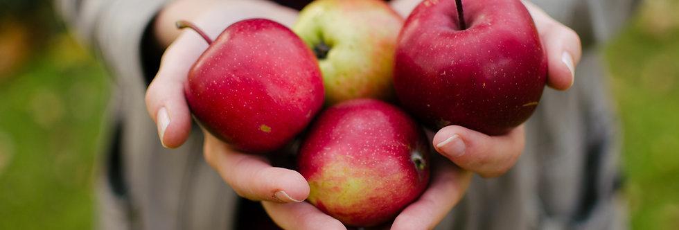 Organic Red Delicious Apple (ea)