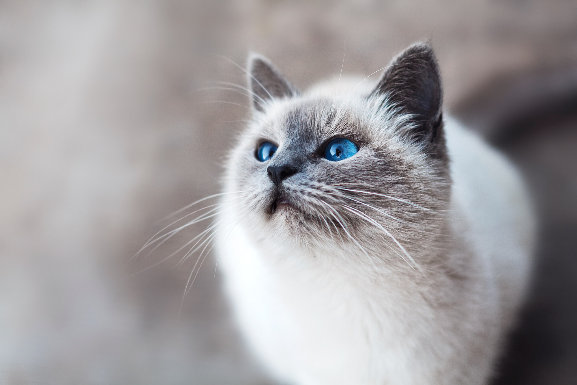 In Depth Should I Feed My Cat With Chronic Kidney Disease A Raw Diet