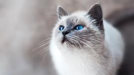 ¿Cómo saber si tu gato tiene frío?