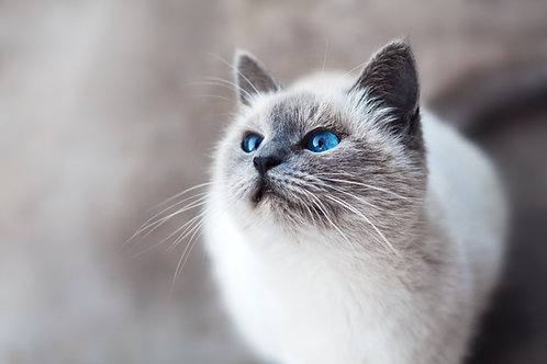 Feline Wellness Test