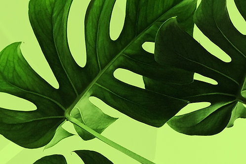 Zentangled Leaves