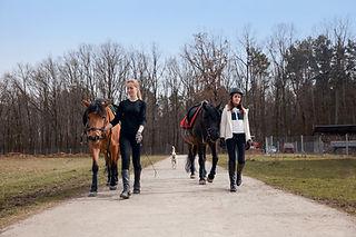 Horse Ridding School