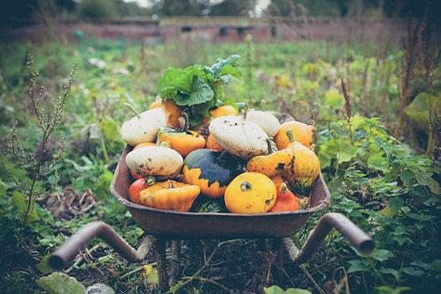 Panier de légumes - Marcel