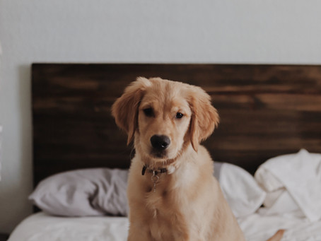 2020 - The Year of the Lockdown Puppy!