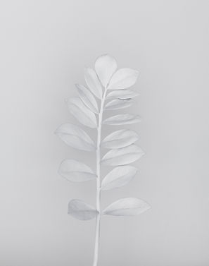 An image of a White Branch