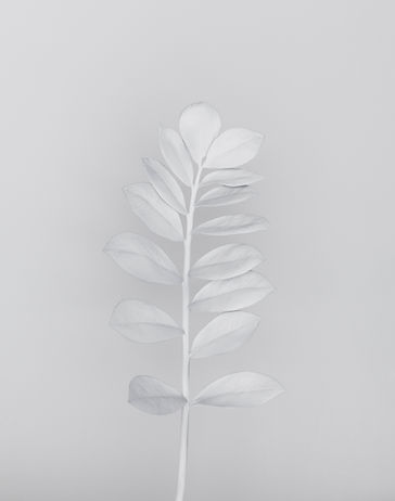 White Branch