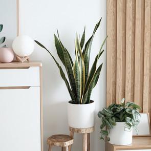 Ilmaa puhdistavat huonekasvit.