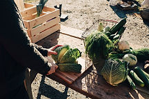 Landmand skærer kål