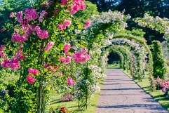 เส้นทางดอกไม้