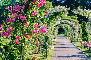 Floral path in a garden.