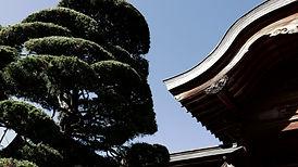 寺院の屋根の木