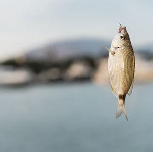 Fish in Hook